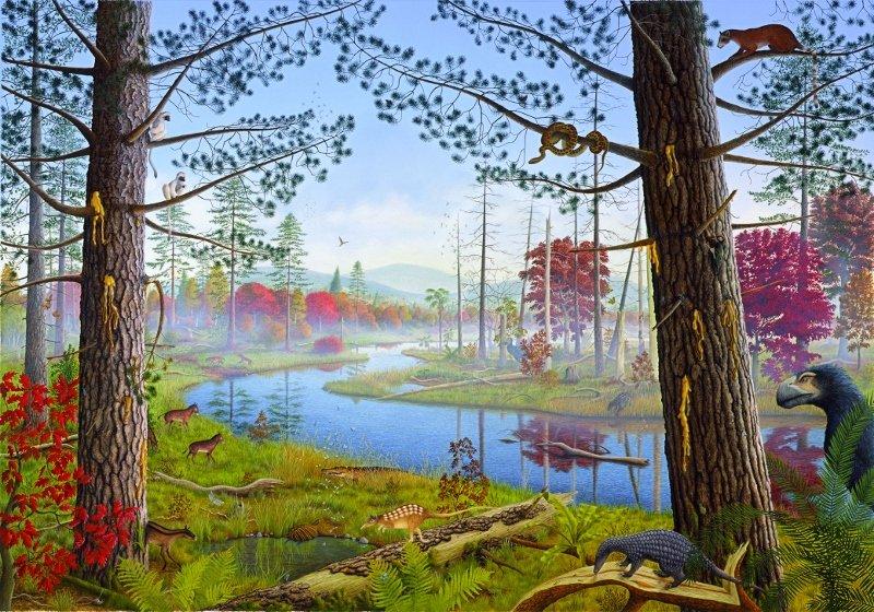 las-bursztynowy--800x560-